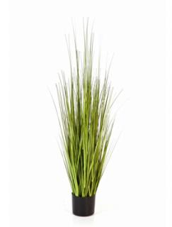 Carex Variegated 120 cm