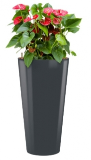 Anthurium Sierra + Runner anthracite